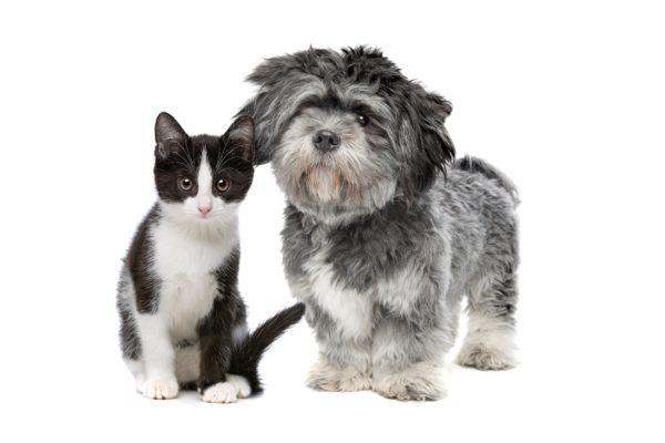 assicura cani e gatti